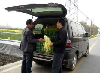 成都市郫县安德镇广福韭菜专业合作社供应韭菜